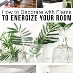 Decorate Plants Indoors Energize Your