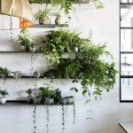 Decorate Your Interior Green Indoor Plants Save