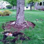 Excellent Landscaping Ideas Around Tree Roots