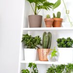Ideas Decorating Plants