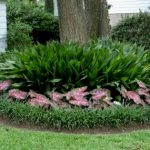 Landscaping Ideas Around Trees Newest Home