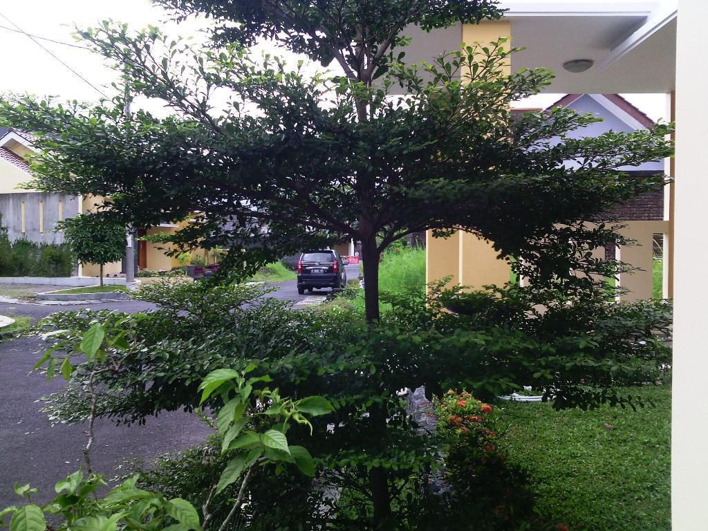Landscaping Ideas Around Trees Wedgelog