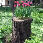 Old Tree Stumps Turned Into Beautiful Flower Planters Bored