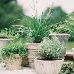 Organic Potted Plant