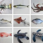 Papermau Realistic Aquatic Animals Paper Models Fisheries Research