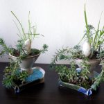 Scented Leaf Potted Plants