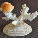 Seashell Craft Make Easy Arts Crafts