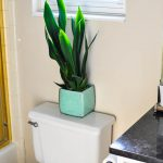 Unexpected Places Decorate Your Home Indoor Plants Fry Sauce