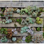 Urchin Collective Diy Recycled Pallet Vertical Succulent