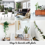 Ways Decorate Plants Katrina