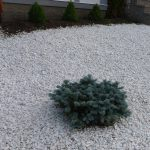 Yourself Landscaping Ideas Diy